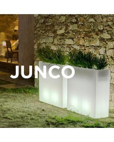 NG Junco kaspó