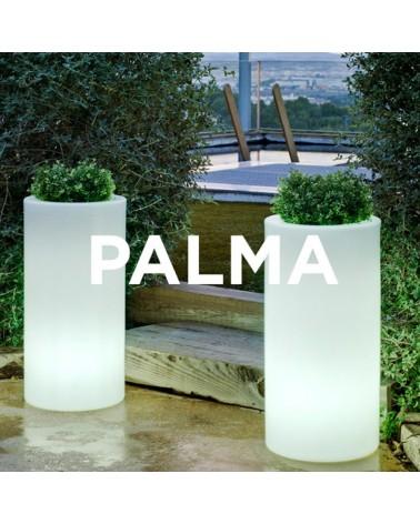 NG Palma kaspó