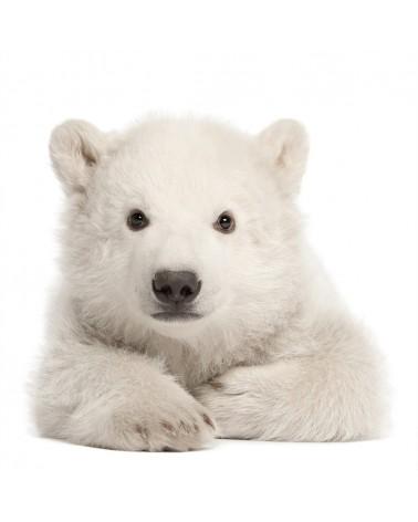 Falmatricák DK jegesmedve minőségi falmatrica